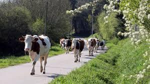 chambre r馮ionale d agriculture bretagne agriculture 11 millions d euros en moins pour la bretagne