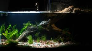 How To Aquascape A Planted Tank Update Planted Turtle Tank Plantedtank