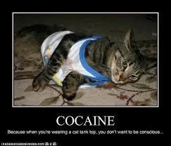 Cat Cocaine Meme - cocaine 50a2c9 447206 jpg