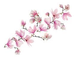 wallpops magnolia 10 piece wall decal set reviews wayfair magnolia 10 piece wall decal set