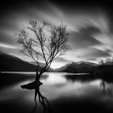 black and white trees photo contest viewbug