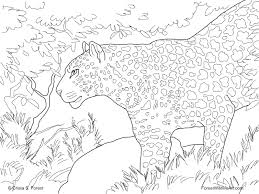 clean leopard coloring pages wild animals large uncategorized