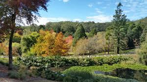 Mt Lofty Botanic Gardens Mount Lofty Botanic Garden S 40th Birthday 5 Nov 2017 Play And Go