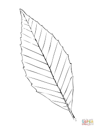 beech tree leaf coloring page free printable coloring pages