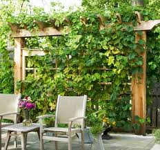 Arbor Ideas Backyard Diy Grape Arbor Plans Arbors Grape Arbor And Grape Vines