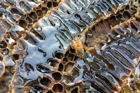 mem gym abuzz as massive bee hive relocated uva today