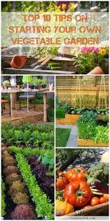 gardening for beginners archives my garden your garden