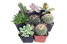 amazon succulents succulents guide a texas inspired succulents and cacti garden for