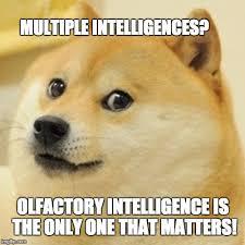 Multiple Picture Meme - doge meme imgflip