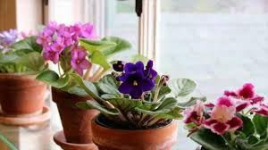 House Plant Top 10 Tropical House Plants Any One Can Grow Youtube