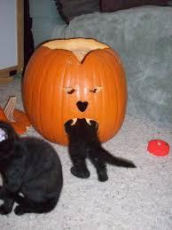 pictures of cats enjoying pumpkins popsugar pets