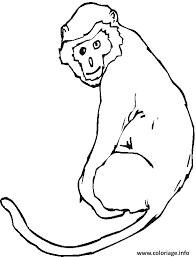 coloriage un singe avec sa queue dessin