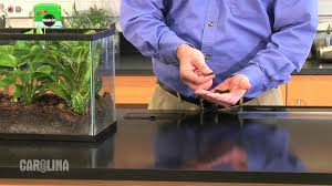 how to set up a terrarium youtube