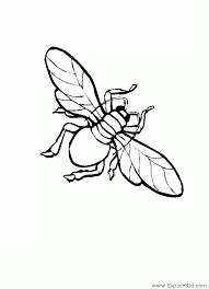 Coloriage Mouche  Insectes