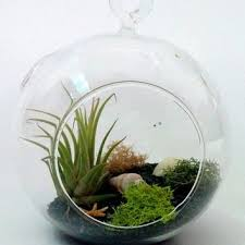 58 best terrarium and stuffs images on pinterest terrariums