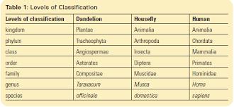 taxonomy sbi 3u biology
