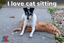 Cat Sitting Meme - being a pet sitter gives you a unique perspective on not only life
