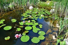 How To Make A Patio Pond Beneficial Pond Bacteria A Waste Of Money Garden Myths