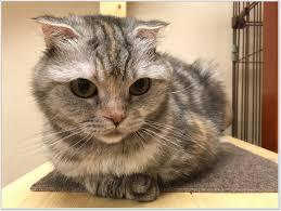 report of cat u0026dog cafe u201dpetton cafe u201d rokujizo kyoto