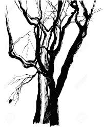 trees drawing graphic sketch stock photo picture and royalty