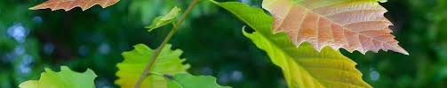 trees atlanta dedicated to protecting atlanta s forest