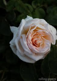 be the artist of your garden u2014 rolling greens nursery u0026 home