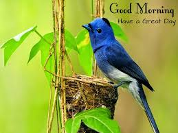 Wallpaper With Birds Good Morning Wishes With Birds Pictures Images