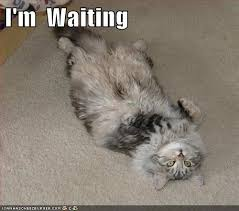 Waiting Memes - i m waiting lolcats lol cat memes funny cats funny cat