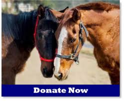 How To Tell If A Horse Is Blind Hicaliber Horse Rescue Dedicated To The Rescue Rehabilitation