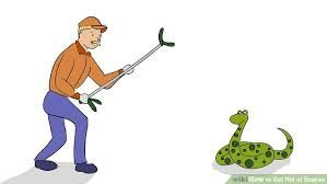 How To Avoid Snakes In Backyard 3 Ways To Get Rid Of Snakes Wikihow