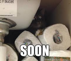 Soon Cat Meme - evil soon cat memes quickmeme