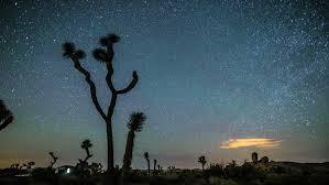 joshua tree timelapse spins around yucca tree in beautiful
