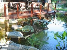 Backyard Swimming Ponds by Nature U0027s Re Creations Swimming Pond In St Louis