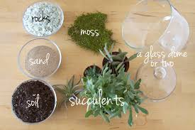 diy succulent diy glass dome succulent garden all sorts of pretty