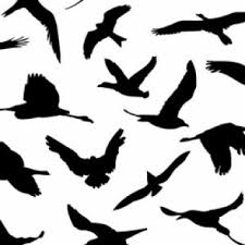 tag draw flying bird draw flying birds step 4