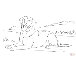 make a photo gallery labrador retriever coloring pages at best all