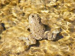 free frogs pictures royalty free photos