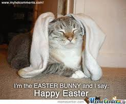 Easter Meme Funny - i m the easter bunny and i say happy easter pictures photos and