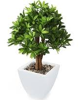 sweet deals on outdoor artificial plants and trees