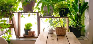 indoor plants for office desk best plants 2017