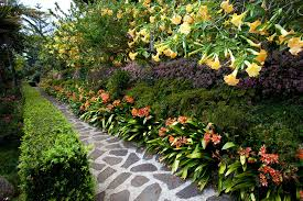 small tropical garden ideas planted with various kind of tropical