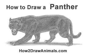 draw black panther roaring