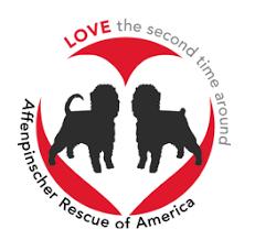affenpinscher for adoption home affenpinscher rescue of america