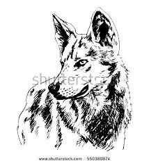wolf drawing stock images royalty free images u0026 vectors