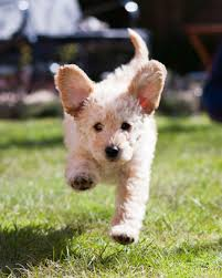hyperactive dogs tips to train your hyperactive dog