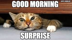 Good Morning Cat Meme - 40 good morning wishes for cat lovers images pictures happy wishes