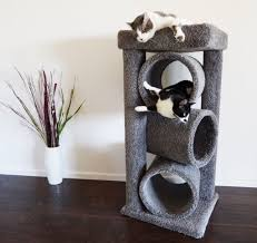 cat perches for large cats the happy cat site