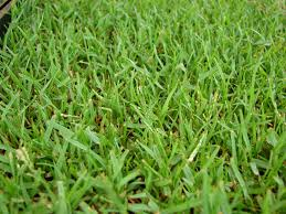 Type Of Grass For Garden Best Garden Fertilizer For Sandy Soil Home Outdoor Decoration