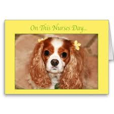 happy nurses day cavalier king charles spaniel card charles