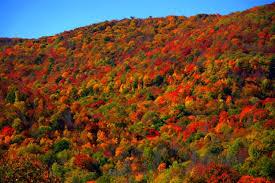 fall camping fall foliage pumpkin patches u0026 u2013 vogel